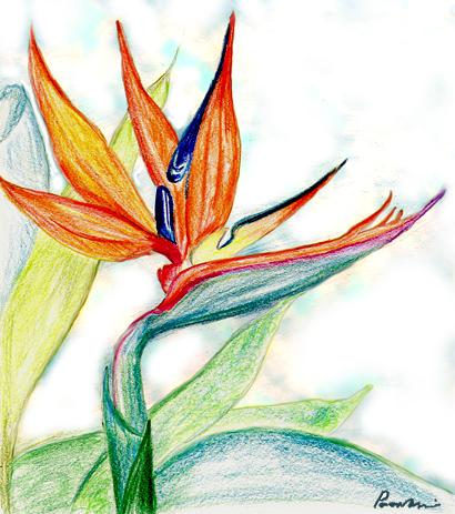 Bird of Paradise- Paavani