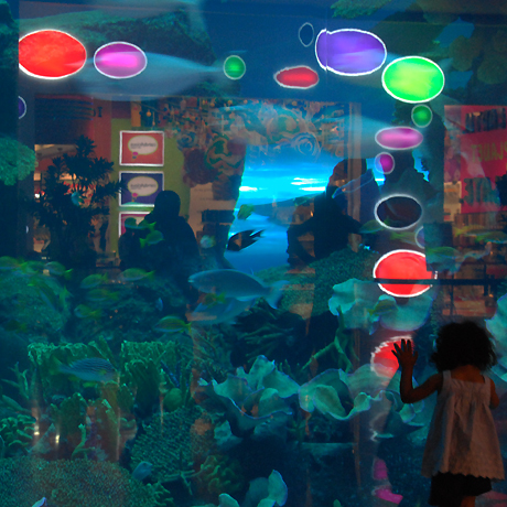dubai mall pics. Aquarium at Dubai mall